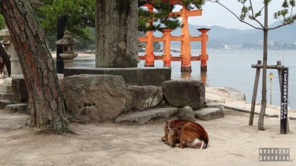 Jelonki w Miyajima, Itsukushima Shrine