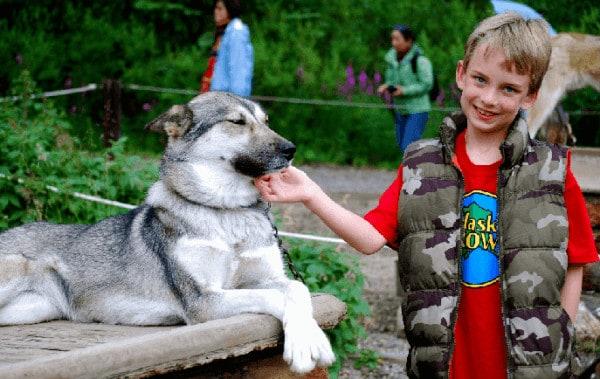 A boy with denali national park's canine patrol