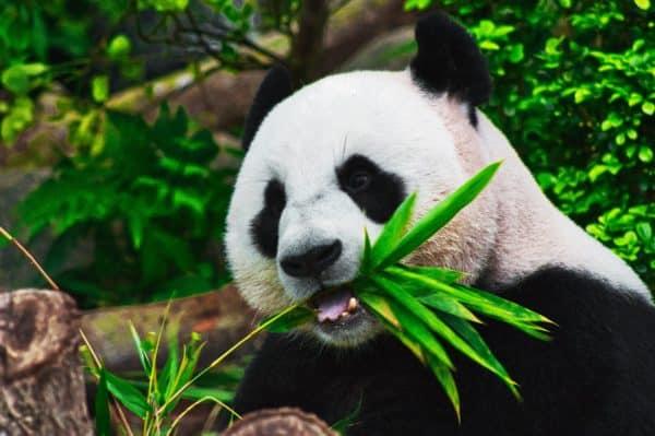 7 errori da evitare quando si fotografa la fauna selvatica