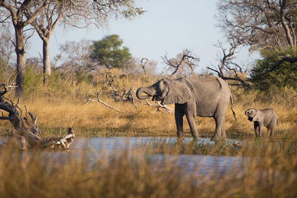 linyanti reserve elephants