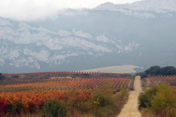 Rioja im Herbst