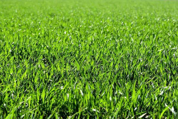 come fotografare l'erba