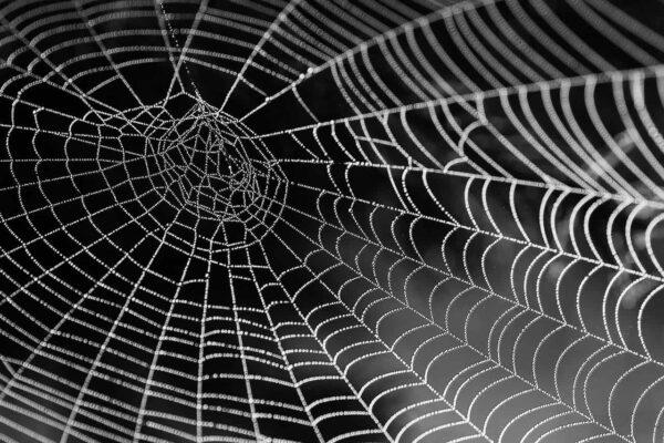 fotografare le ragnatele