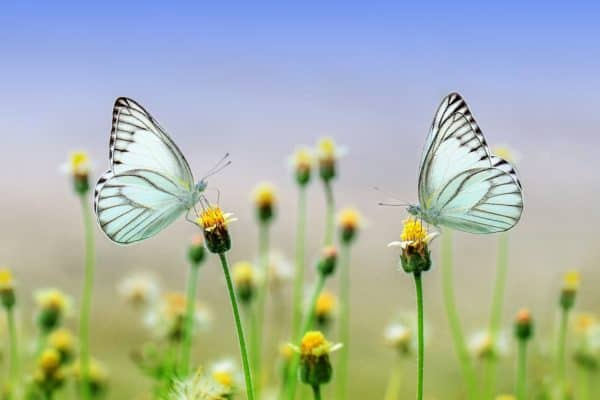 butterfly, insect, macro