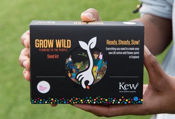 Grow_Wild_Seeds6