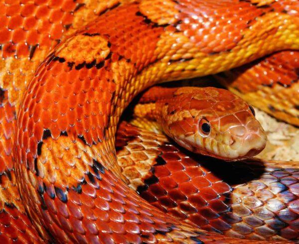 foto di serpenti