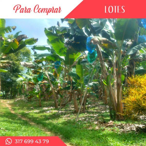 Cultivos de aguacate y plátano en Yotoco