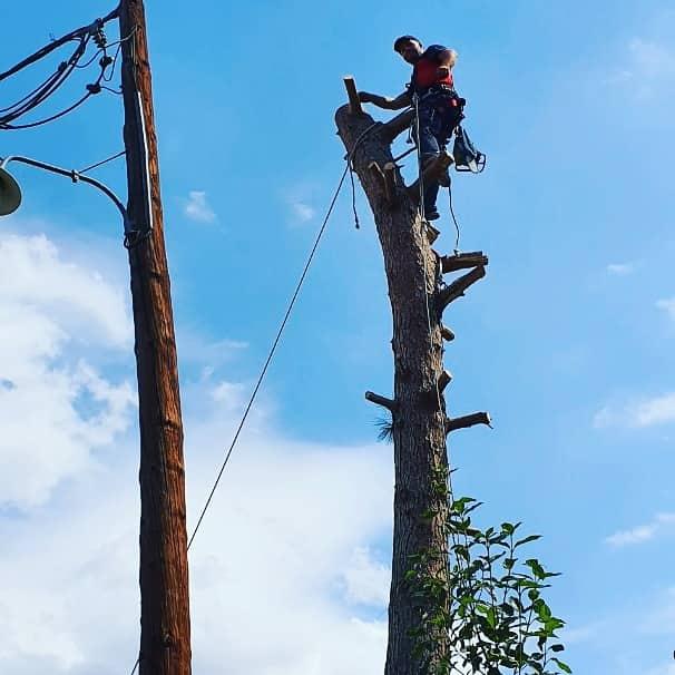 εναερίτης πάνω σε δέντρο