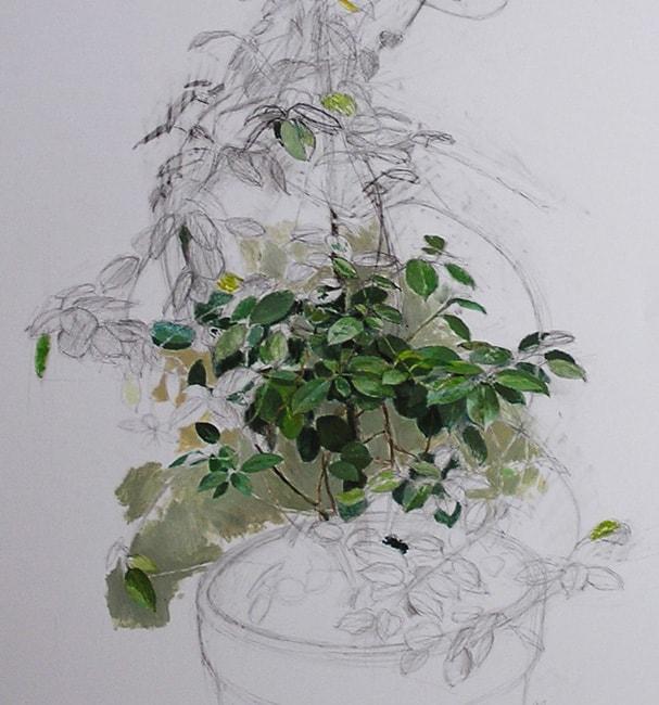 Formas vegetales. Acrílico y lápiz sobre papel