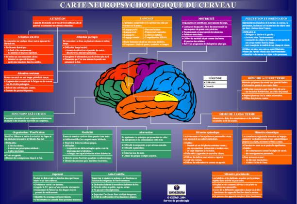 carte neuropsychologique du cerveau