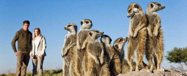 meerkat-interactions