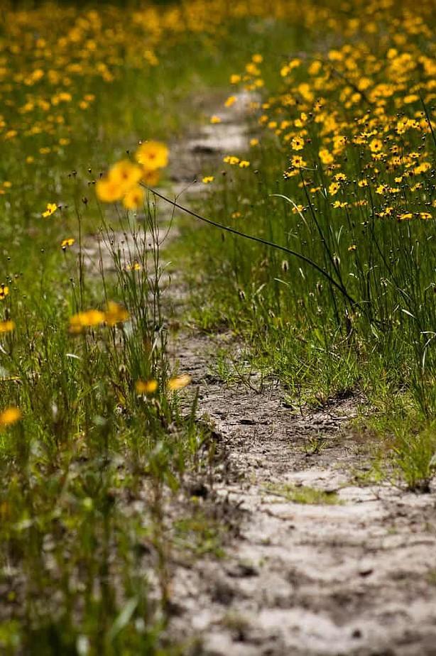 Wildflower walk Florida
