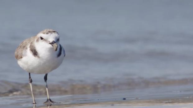 Un pájaro bloque un proyecto eólico de 34 millones en Canarias