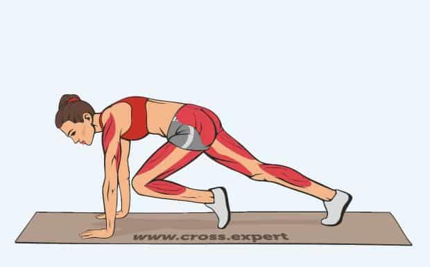 Мышцы, работающие при беге в упоре лежа