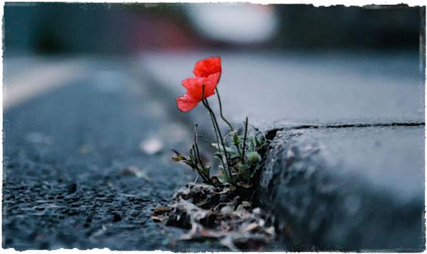 Цветок пробивается сквозь асфальт