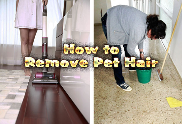 Photo of How to Remove Pet Hair