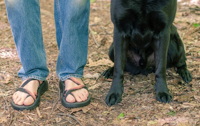 Two pairs of feet, one human - wearing a pair of Chaco sandals, and one dog - a black labrador.