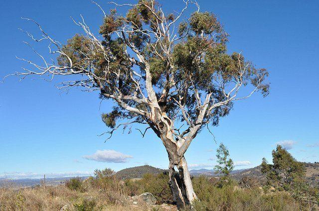 HANDIGE KAMPEERTIPS  Kamperen in Australië, alles wat je moet weten over Aussie camping!