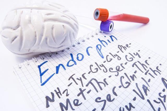 Neuropeptide sind Hormone und dienen als Botenstoff für unterschiedlichste Geschehen im Körper. Bekannte Vertreter sind die Endorphine auch Glückshormone genannt. Sie sind ein körpereigenes Schmerzmittel (Opioid).
