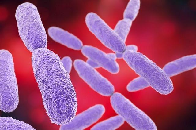 Klebsiellen sind Stäbchenbakterien und existieren viele verschiedene Unterarten, die auch teilweise im Magen-Darmtrakt vorkommen und unempfindlich gegen Penicillin sind. Eine Variante löst mitunter Geschlechtskrankheiten aus.