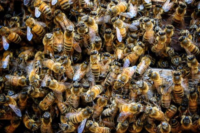 come-diventare-apicoltore