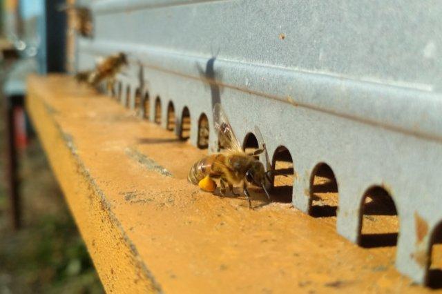 miglior-libro-sull-api-e-apicoltura