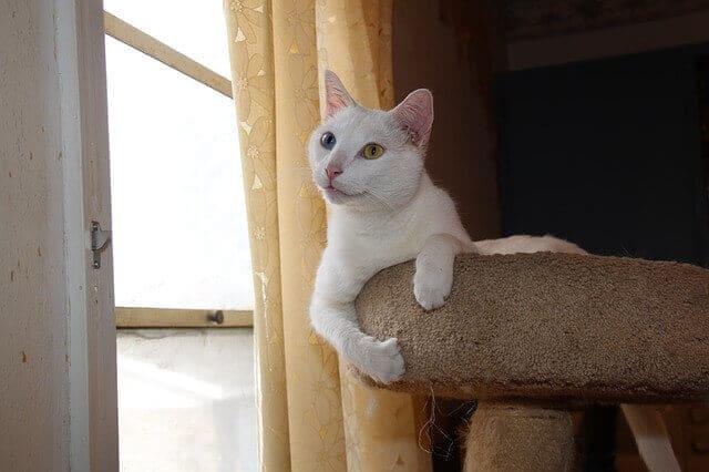 arbre à chat fenetre