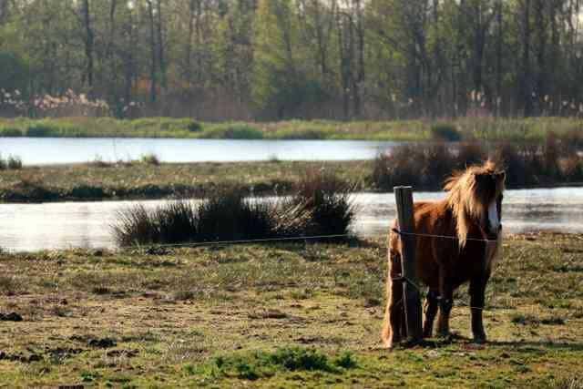 Natuurcampings Nederland  Campingtip: De Reidplûm, kamperen tussen de ooievaarsnesten op