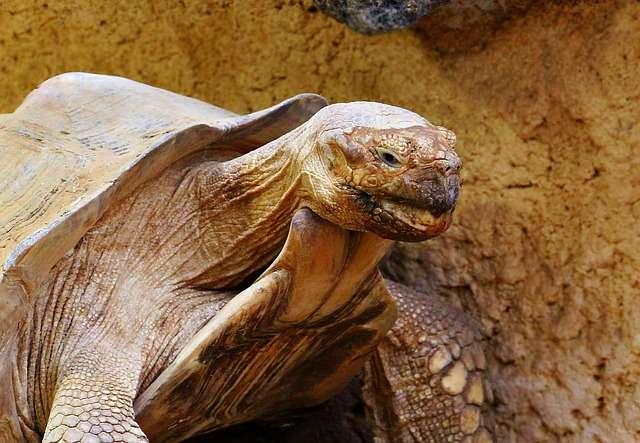 De Reuzenschildpad dieren die heel oud worden