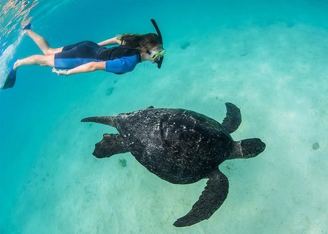 Sea Creatures of Galapagos