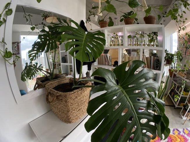 Bei diesem von Pflanzen inspirierten Innentrend geht es darum, eine botanische Oase zu schaffen