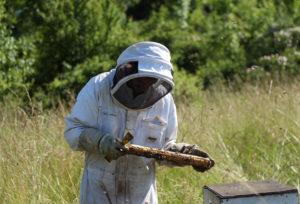 batiste bel apiculteur