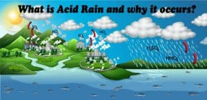 What is Acid Rain and why it occurs?