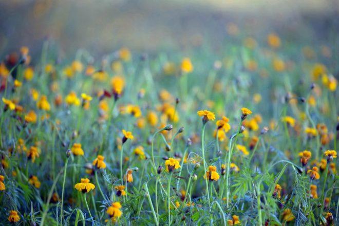 Gele bloemen - Fotograaf Henk De Vos