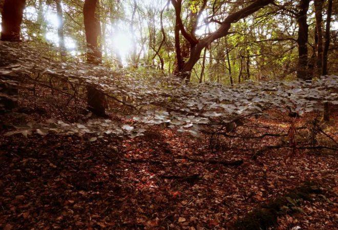 Herfstbladeren in het Dwingelderveld
