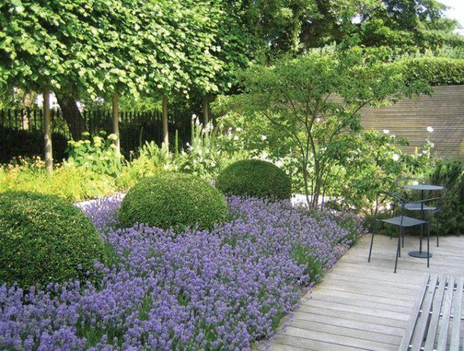 Low Maintenance Lavender