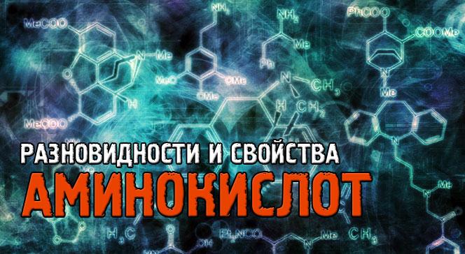Виды аминокислот и их функции