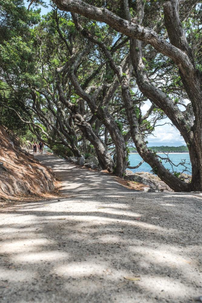 Weg entlang einer Allee von knorrigen alten Bäumen