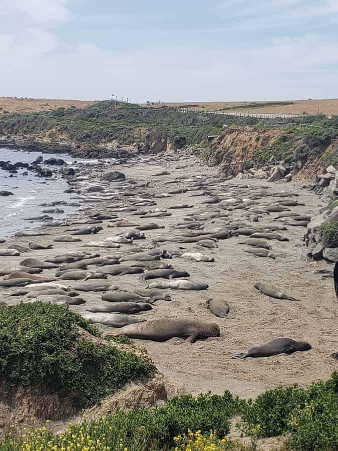 Piedras Blancas Beach with Sea Lions
