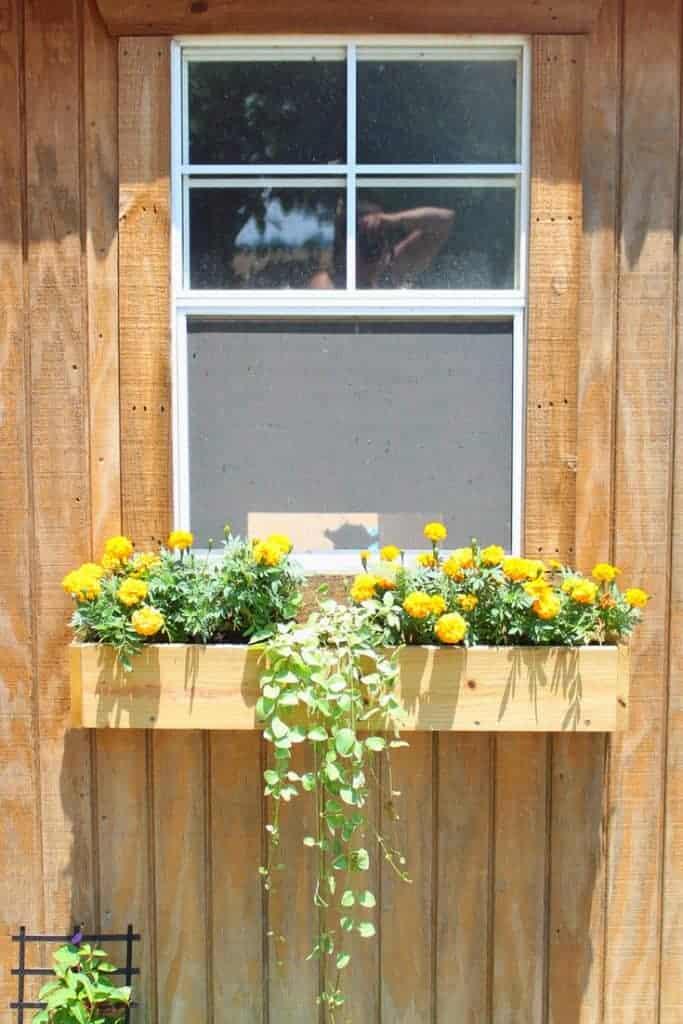 Backyard chicken coop window installation tutorial