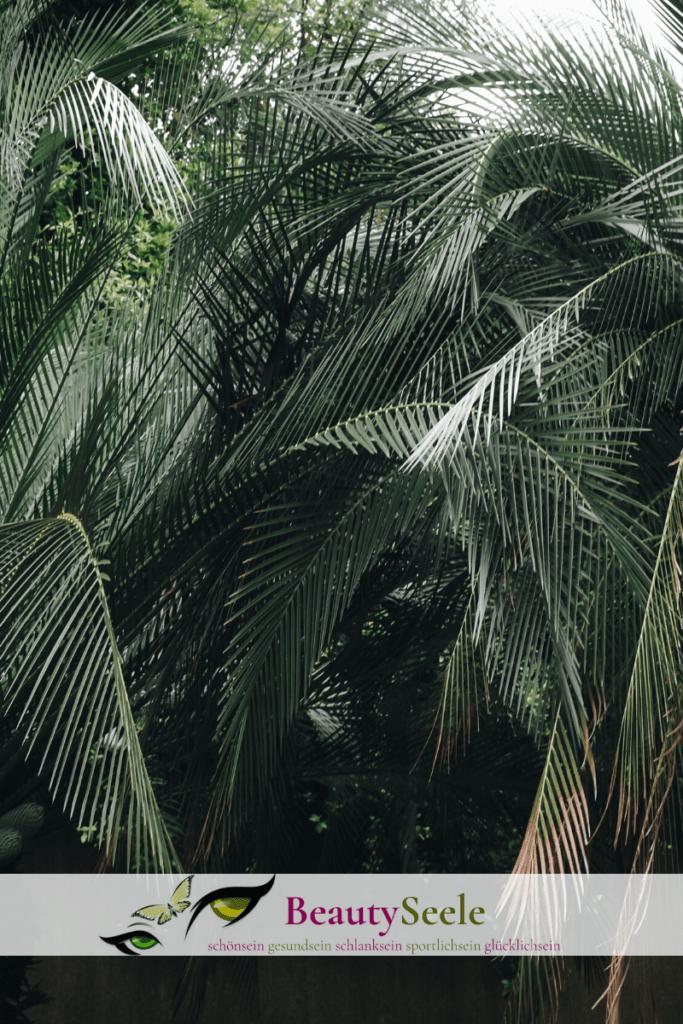 Palmöl: Umweltschaden durch Kosmetik Inhaltsstoffe