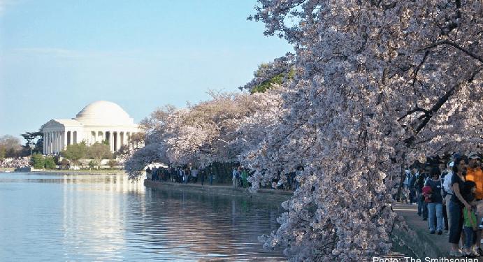 spring flowers in Washington, DC