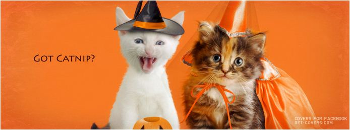 witches cats halloween facebook cover pic