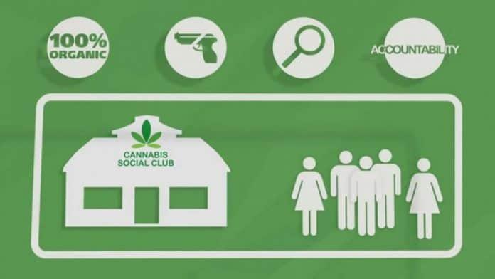 cannabis social clubs