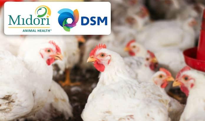 DSM acquires next-generation eubiotics platform start-up