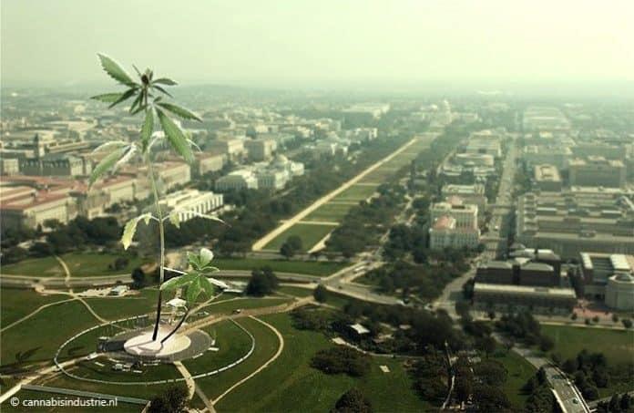 democratische partij cannabis trump cannabis onderzoek cannabis legalisatie amerikaanse congres more act joe biden drug czar