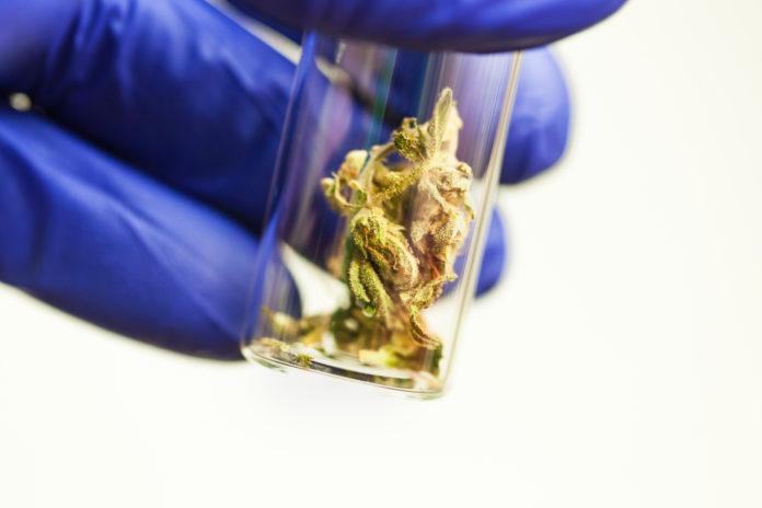 cannabis testing labs massachussets