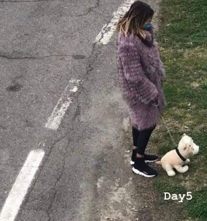 autocertificazione cane finto