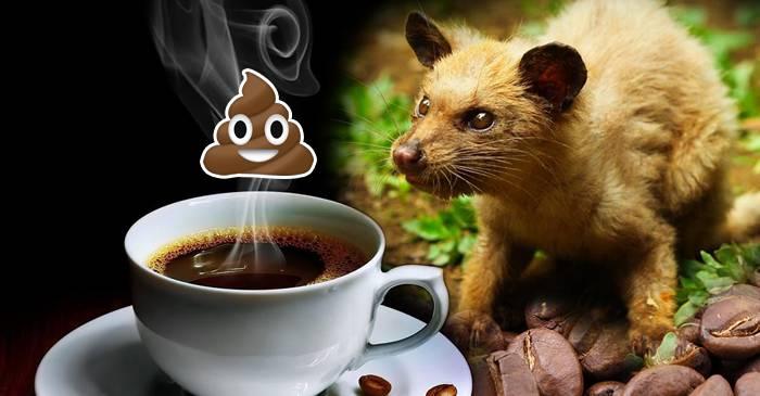 """7 curiozități despre cafea, """"licoarea magică"""" de zi cu zi featured_compressed"""
