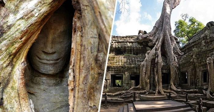 """Copacii uriași care """"au înghițite"""" templele Ta Prohm, din Cambodgia featured_compressed"""